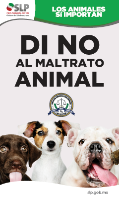 GOB 6 - MALTRATO ANIMAL